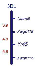 Map of chromosome 3DL near Yr45